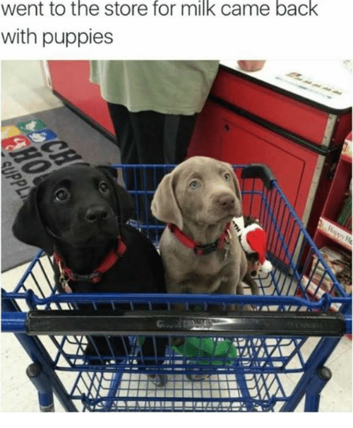 went to the store for milk came back with puppies meme on sizzle. Black Bedroom Furniture Sets. Home Design Ideas