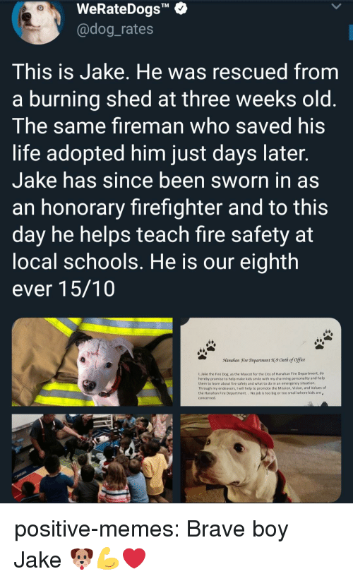 "Sworn: WeRateDogs""  @dog_rates  TM  This is Jake. He was rescued from  a burning shed at three weeks old  The same fireman who saved his  life adopted him just days later  Jake has since been sworn in as  an honorary firefighter and to this  day he helps teach fire safety at  ocal schools. He is our eighth  ever 15/10  Manahan Fire Department X9 Oath of office  1, Jake the Fire Dog, as the Mascot for the City of Hanahan Fire Department, do  hereby promise to help make kids smile with my charming personality and help  them to learn about fire safety and what to do in an emergency situation  Through my endeavors, I will help to promote the Mission, Vision, and Values of  the Hanahan Fire Department.. No job is too big or too small where kids are  concerned positive-memes:  Brave boy Jake 🐶💪❤"