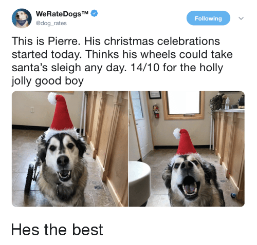celebrations: WeRateDogsTM  @dog_rates  Following  This is Pierre. His christmas celebrations  started today. Thinks his wheels could take  santa's sleigh any day. 14/10 for the holly  jolly good boy Hes the best