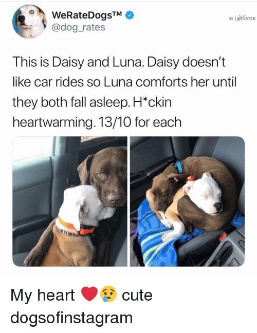Cute, Fall, and Memes: WeRateDogsTM  @dog rates  IG   @LESTER  This is Daisy and Luna. Daisy doesn't  like car rides so Luna comforts her until  they both fall asleep. H*ckin  heartwarming. 13/10 for each My heart ❤️😢 cute dogsofinstagram