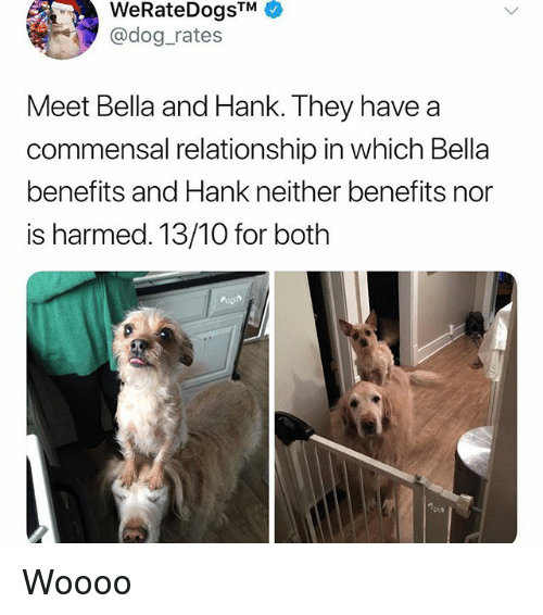 Memes, 🤖, and Dog: WeRateDogsTM  @dog rates  Meet Bella and Hank. They have a  commensal relationship in which Bella  benefits and Hank neither benefits nor  is harmed. 13/10 for both Woooo