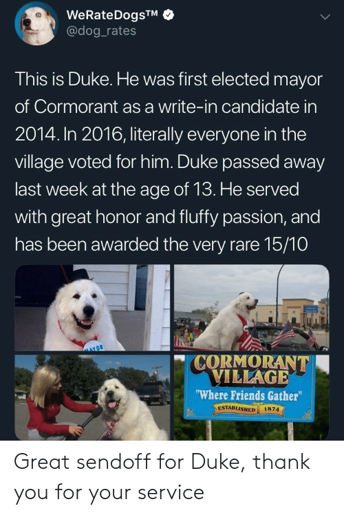 The Village: WeRateDogsTM  @dog rates  This is Duke. He was first elected mayor  of Cormorant as a write-in candidate in  2014. In 2016, literally everyone in the  village voted for him. Duke passed away  last week at the age of 13. He served  with great honor and fluffy passion, and  has been awarded the very rare 15/10  CORMORANT  VILLAGE  Where Friends Gather  ESTABLISHED 1874  vdl Great sendoff for Duke, thank you for your service