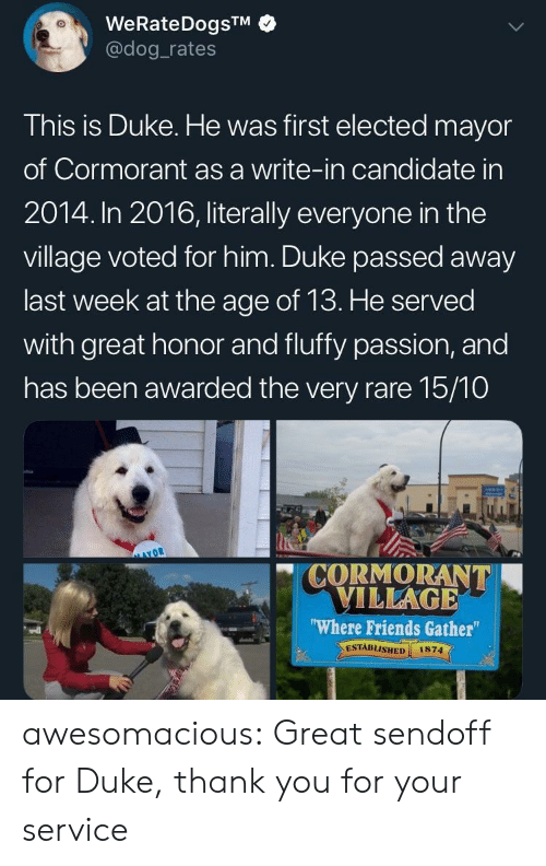 The Village: WeRateDogsTM  @dog rates  This is Duke. He was first elected mayor  of Cormorant as a write-in candidate in  2014. In 2016, literally everyone in the  village voted for him. Duke passed away  last week at the age of 13. He served  with great honor and fluffy passion, and  has been awarded the very rare 15/10  CORMORANT  VILLAGE  Where Friends Gather  ESTABLISHED 1874  vdl awesomacious:  Great sendoff for Duke, thank you for your service