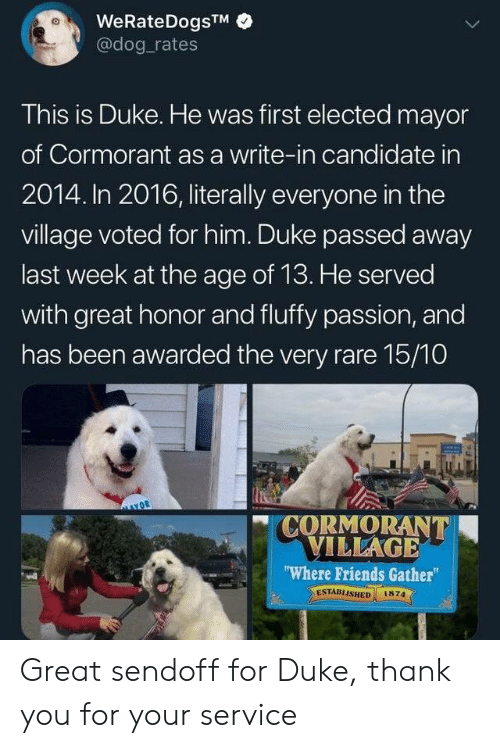 "Friends, Thank You, and Duke: WeRateDogsTM  @dog rates  This is Duke. He was first elected mayor  of Cormorant as a write-in candidate in  2014. In 2016, literally everyone in the  village voted for him. Duke passed away  last week at the age of 13. He served  with great honor and fluffy passion, and  has been awarded the very rare 15/10  CORMORANT  VILLAGE  ""Where Friends Gather  ESTABLISHED  1874 Great sendoff for Duke, thank you for your service"