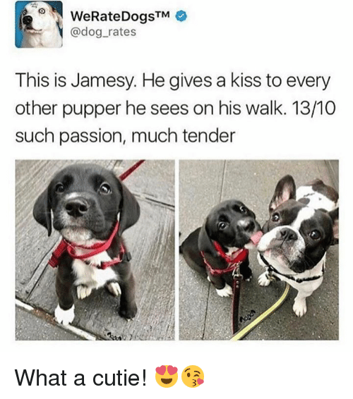 Dank, Kiss, and 🤖: WeRateDogsTM  @dog rates  This is Jamesy. He gives a kiss to every  other pupper he sees on his walk. 13/10  such passion, much tender What a cutie! 😍😘