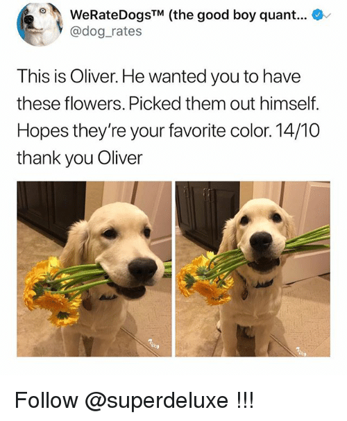 Memes, Thank You, and Flowers: WeRateDogsTM (the good boy quant...  @dog rates  This is Oliver. He wanted you to have  these flowers. Picked them out himself.  Hopes they're your favorite color. 14/10  thank you Oliver Follow @superdeluxe !!!