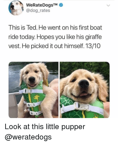 Memes, Ted, and Giraffe: WeRateDogsTMe  @dog_rates  This is Ted. He went on his first boat  ride today. Hopes you like his giraffe  vest. He picked it out himself. 13/10  Look at this little pupper @weratedogs