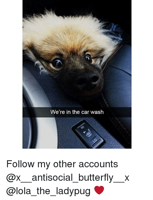 Memes, Butterfly, and Antisocial: We're in the car wash Follow my other accounts @x__antisocial_butterfly__x @lola_the_ladypug ❤️