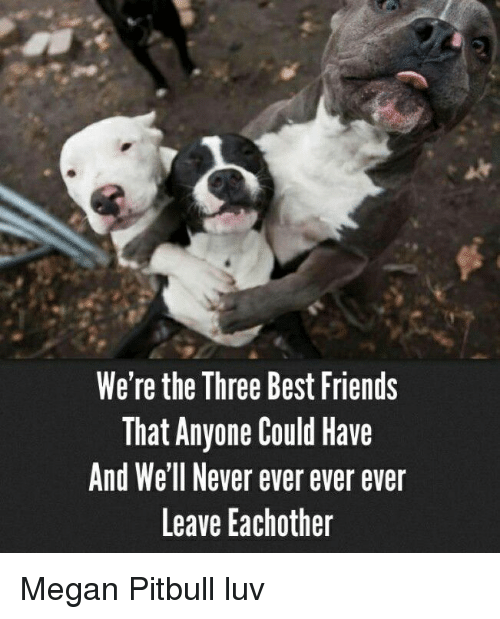 Friends, Megan, and Memes: We're the Three Best Friends  That Anyone Could Have  And Well Never ever ever ever  Leave Eachother Megan Pitbull luv