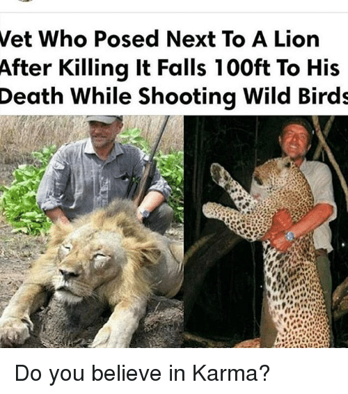 Memes, Birds, and Death: Wet Who Posed Next To A Lion  After Killing it Falls 100ft To His  Death While Shooting Wild Birds Do you believe in Karma?