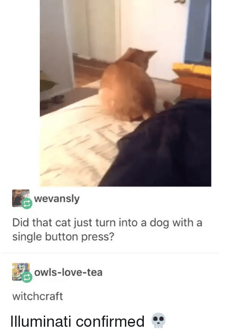 Illuminati, Love, and Girl Memes: wevansly  Did that cat just turn into a dog with a  single button press?  owls-love-tea  witchcraft Illuminati confirmed 💀