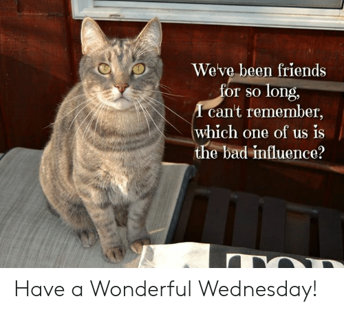 Have A Wonderful Wednesday: Weve been friends  or so long,  cant remember,  which one of us is  the bad influence? Have a Wonderful Wednesday!