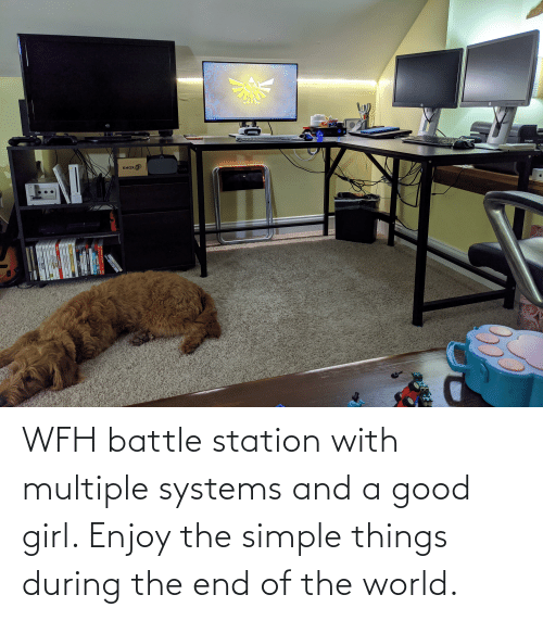 end of the world: WFH battle station with multiple systems and a good girl. Enjoy the simple things during the end of the world.