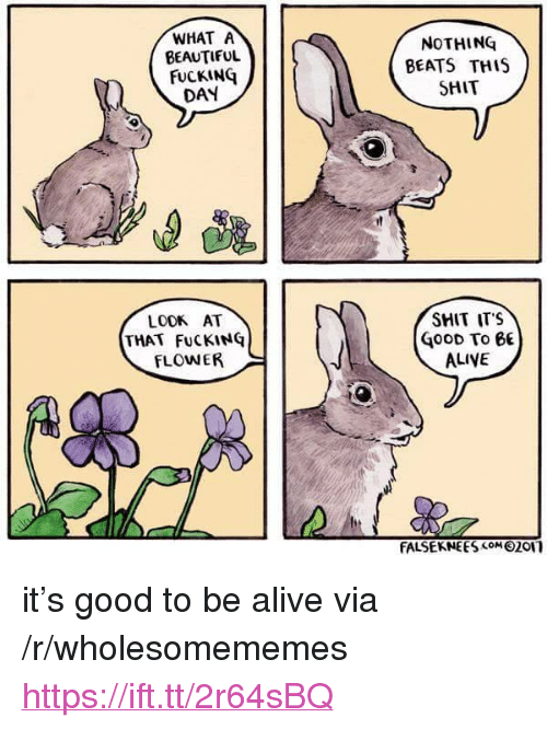 """Alive, Beautiful, and Fucking: WHAT A  BEAUTIFUL  FUCKING  DAY  NOTHING  BEATS THIS  SHIT  SHIT ITS  LOOK AT  THAT FuCKING  FLOWER  oOD To 6E  ALIVE  FALSEKNE ES com 0201 <p>it's good to be alive via /r/wholesomememes <a href=""""https://ift.tt/2r64sBQ"""">https://ift.tt/2r64sBQ</a></p>"""