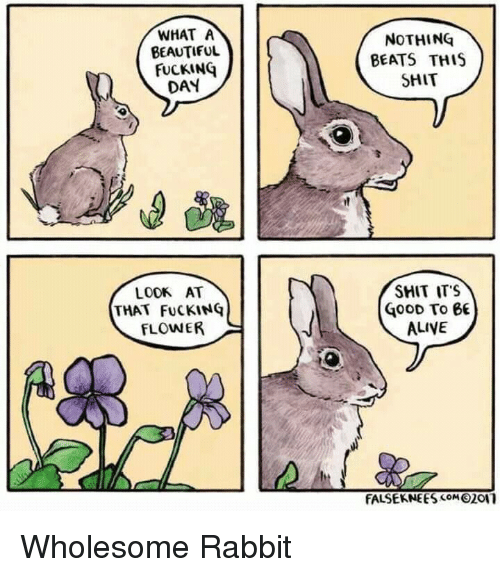 Alive, Beautiful, and Shit: WHAT A  BEAUTIFUL  FUCKINQ  DAY  NOTHING  BEATS THIS  SHIT  LODK AT  THAT FuCKINÇ  FLOWER  SHIT ITS  GOOD To 6  ALIVE  FALSEKNEESOM2011 <p>Wholesome Rabbit</p>