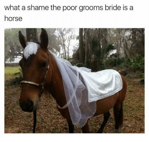 Horse, Shame, and What: what a shame the poor grooms bride is a  horse