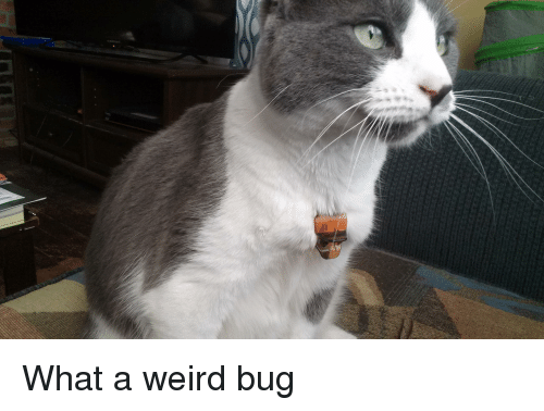 Weird, Bug, and What