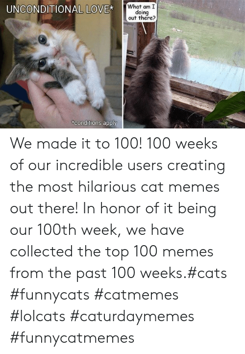 LOLcats: What am I  doing  out there?  UNCONDITIONAL LOVE*  conditions apply We made it to 100! 100 weeks of our incredible users creating the most hilarious cat memes out there! In honor of it being our 100th week, we have collected the top 100 memes from the past 100 weeks.#cats #funnycats #catmemes #lolcats #caturdaymemes #funnycatmemes