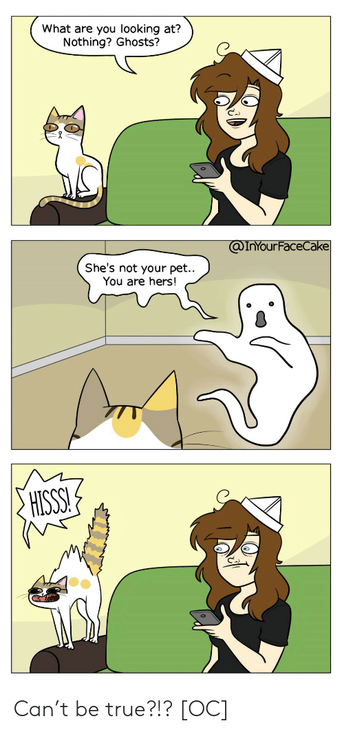 True, Looking, and Ghosts: What are you looking at?  Nothing? Ghosts?  @InYOur FaceCake  She's not your pet..  You are hers!  HISSS! Can't be true?!? [OC]
