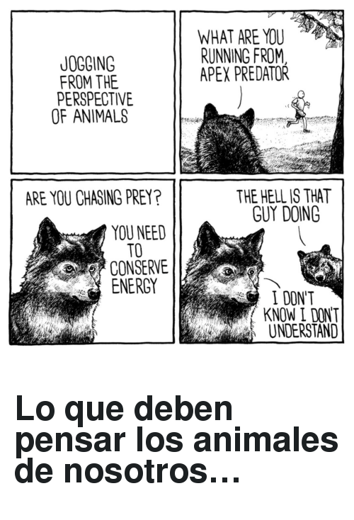 Animals, Energy, and Apex: WHAT ARE YOU  RUNNING FROM  APEX PREDATOR  JOGGING  FROM THE  PERSPECTIVE  OF ANIMALS  THE HELL IS THAT  GUY DOING  ARE YOU CHASING PREY?  YOU NEED  TO  CONSERVE  ENERGY  I DONT  KNOW I DON'T  UNDERSTAND <h2>Lo que deben pensar los animales de nosotros…</h2>