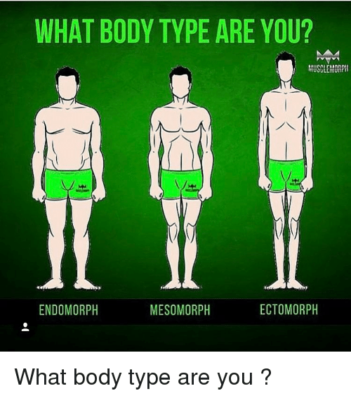 Memes, 🤖, and Ectomorph: WHAT BODY TYPE ARE YOU?  MUSCLCHORPI  ENDOMORPH  ECTOMORPH  MESO MORPH What body type are you ?