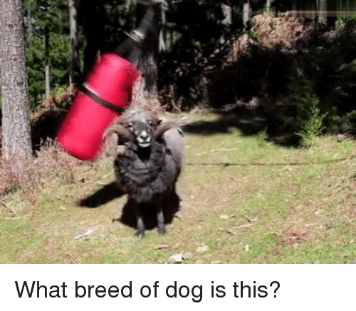 Dank, 🤖, and Dog: What breed of dog is this?