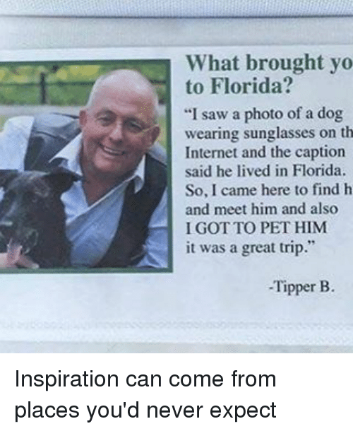 """tripped: What brought yo  to Florida?  """"I saw a photo of a dog  wearing sunglasses on th  Internet and the caption  said he lived in Florida.  So, I came here to find h  and meet him and also  I GOT TO PET HIM  it was a great trip  Tipper B. Inspiration can come from places you'd never expect"""