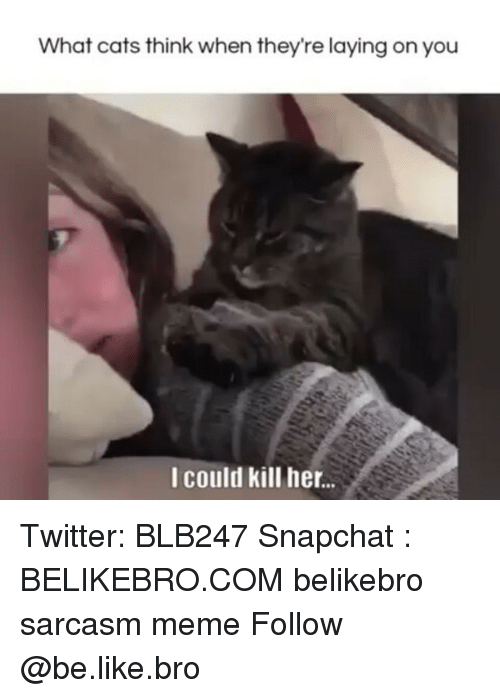 Be Like, Cats, and Meme: What cats think when they're laying on you  I could kill her.. Twitter: BLB247 Snapchat : BELIKEBRO.COM belikebro sarcasm meme Follow @be.like.bro