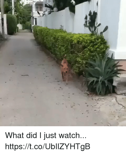 Watch, Relatable, and Did: What did I just watch...  https://t.co/UbIlZYHTgB