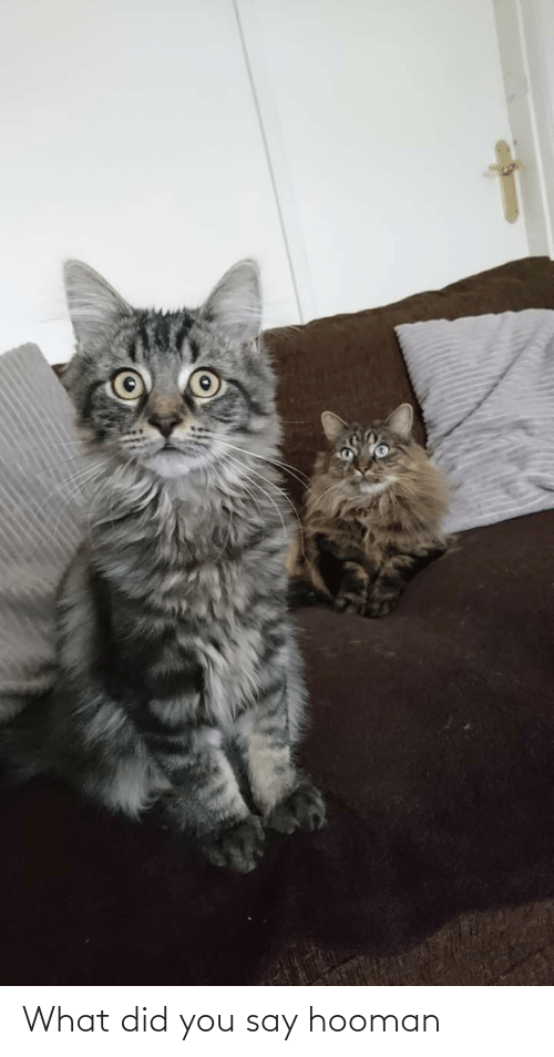 what did you say: What did you say hooman