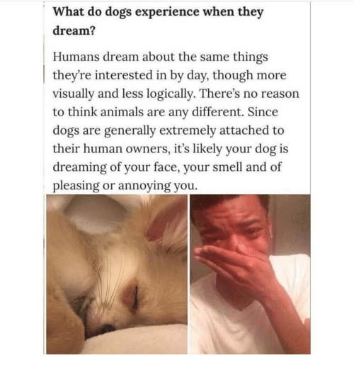 Animals, Dogs, and Memes: What do dogs experience when they  dream?  Humans dream about the same things  they're interested in by day, though more  visually and less logically. There's no reason  to think animals are any different. Since  dogs are generally extremely attached to  their human owners, it's likely your dog is  dreaming of your face, your smell and of  pleasing or annoying you.
