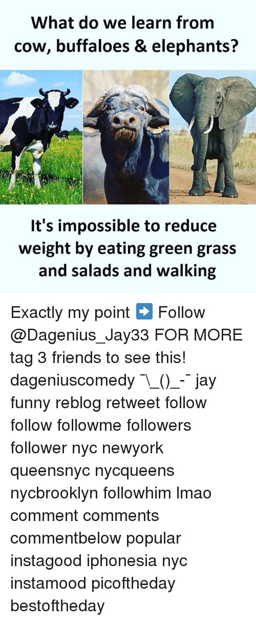 Friends, Funny, and Jay: What do we learn from  cow, buffaloes & elephants?  It's impossible to reduce  weight by eating green grass  and salads and walking Exactly my point ➡️ Follow @Dagenius_Jay33 FOR MORE tag 3 friends to see this! dageniuscomedy ¯\_(ツ)_-¯ jay funny reblog retweet follow follow followme followers follower nyc newyork queensnyc nycqueens nycbrooklyn followhim lmao comment comments commentbelow popular instagood iphonesia nyc instamood picoftheday bestoftheday