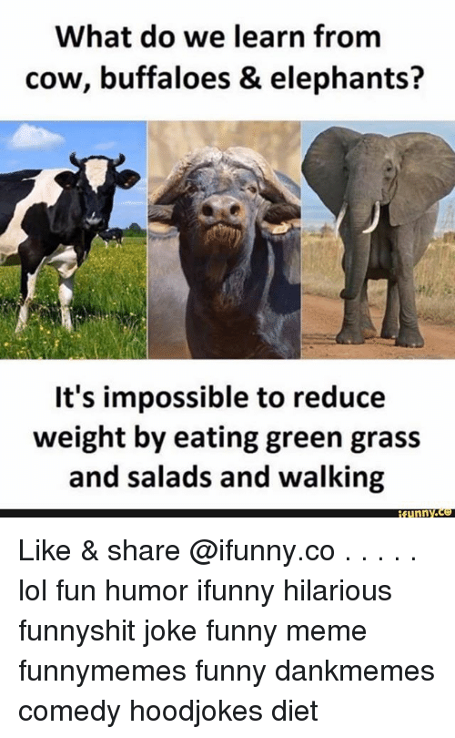 Funny, Lol, and Meme: What do we learn from  cow, buffaloes & elephants?  It's impossible to reduce  weight by eating green grass  and salads and walking  funny. Like & share @ifunny.co . . . . . lol fun humor ifunny hilarious funnyshit joke funny meme funnymemes funny dankmemes comedy hoodjokes diet