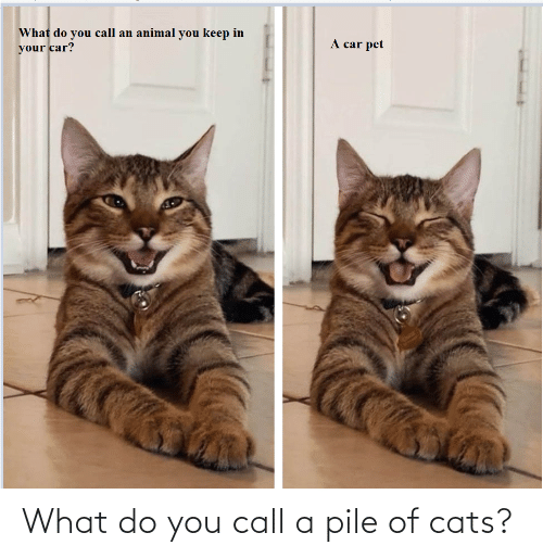 what do you: What do you call a pile of cats?