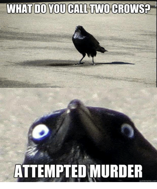 Memes, Murder, and 🤖: WHAT DO YOU CALL TWO CROWS?  ATTEMPTED MURDER  quicknseme com