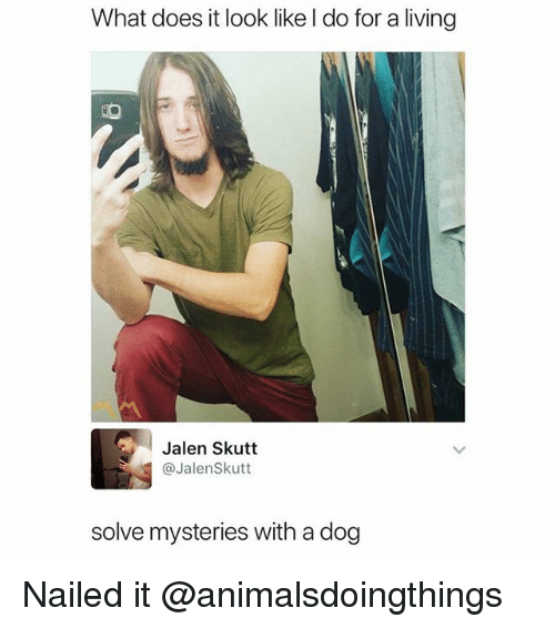 What Does, Dank Memes, and Living: What does it look like l do for a living  Jalen Skutt  @JalenSkutt  solve mysteries with a dog Nailed it @animalsdoingthings
