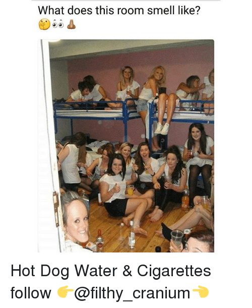 Memes, Smell, and Water: What does this room smell like? Hot Dog Water & Cigarettes follow 👉@filthy_cranium👈