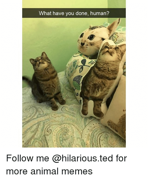 Funny, Memes, and Ted: What have you done, human?  (c Follow me @hilarious.ted for more animal memes