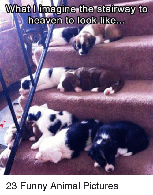 what i imagine: What I imagine the Stairway to  eaven to Took like 23 Funny Animal Pictures