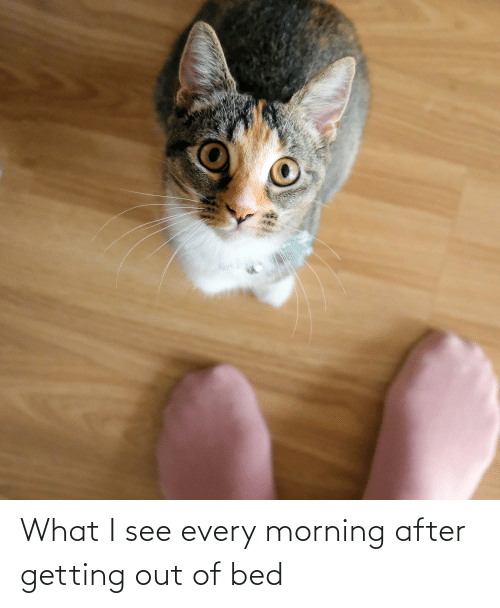 getting out of bed: What I see every morning after getting out of bed