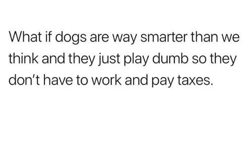 Humans of Tumblr: What if dogs are way smarter than we  think and they just play dumb so they  don't have to work and pay taxes.