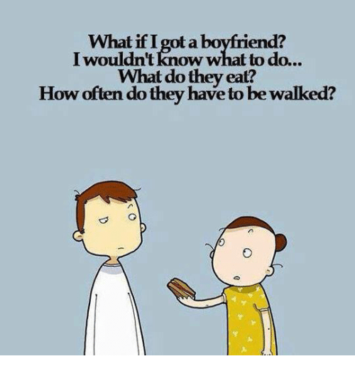 Relationships, How, and Got: What if I got a bovfriend?  I wouldn't know what to do.  What do thev eat?  How often do they have to be walked?  ..