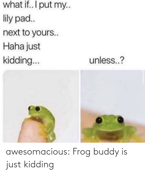 kidding: what if.. I put my..  lily pad..  next to yours..  Haha just  unless..?  kidding.. awesomacious:  Frog buddy is just kidding