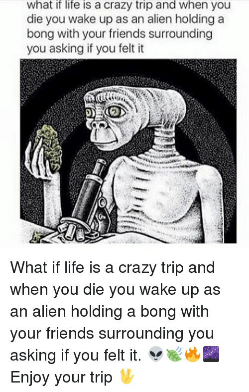 Memes, Aliens, and Alien: What if life is a crazy trip and when you  die you wake up as an alien holding a  bong with your friends surrounding  you asking if you felt it What if life is a crazy trip and when you die you wake up as an alien holding a bong with your friends surrounding you asking if you felt it. 👽🍃🔥🌌 Enjoy your trip 🖖