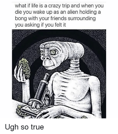 SIZZLE: what if life is a crazy trip and when you  die you wake up as an alien holding a  bong with your friends surrounding  you asking if you felt it Ugh so true