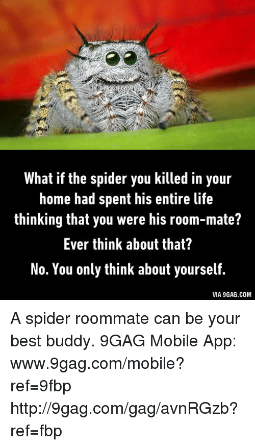 Image result for spider roommate meme