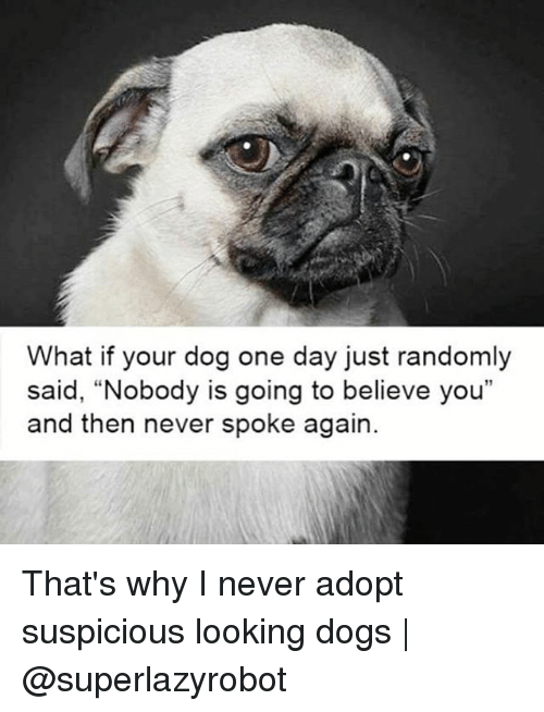 """Suspicious: What if your dog one day just randomly  said, """"Nobody is going to believe you""""  and then never spoke again. That's why I never adopt suspicious looking dogs 