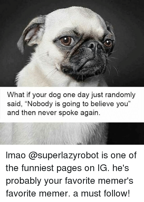 """Memerized: What if your dog one day just randomly  said, Nobody is going to beve you""""  said, """"Nobody is going to believe you""""  and then never spoke again. lmao @superlazyrobot is one of the funniest pages on IG. he's probably your favorite memer's favorite memer. a must follow!"""