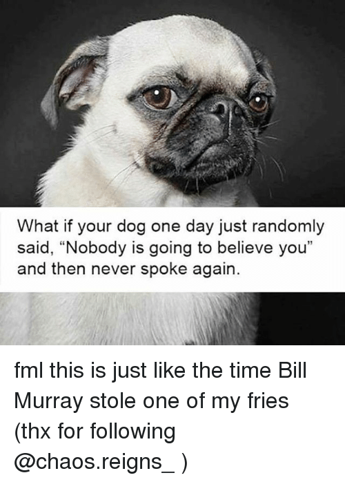 """Fml, Memes, and Bill Murray: What if your dog one day just randomly  said, """"Nobody is going to believe you""""  and then never spoke again. fml this is just like the time Bill Murray stole one of my fries (thx for following @chaos.reigns_ )"""