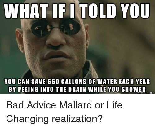 25+ Best Memes About Bad Advice Mallard | Bad Advice ...